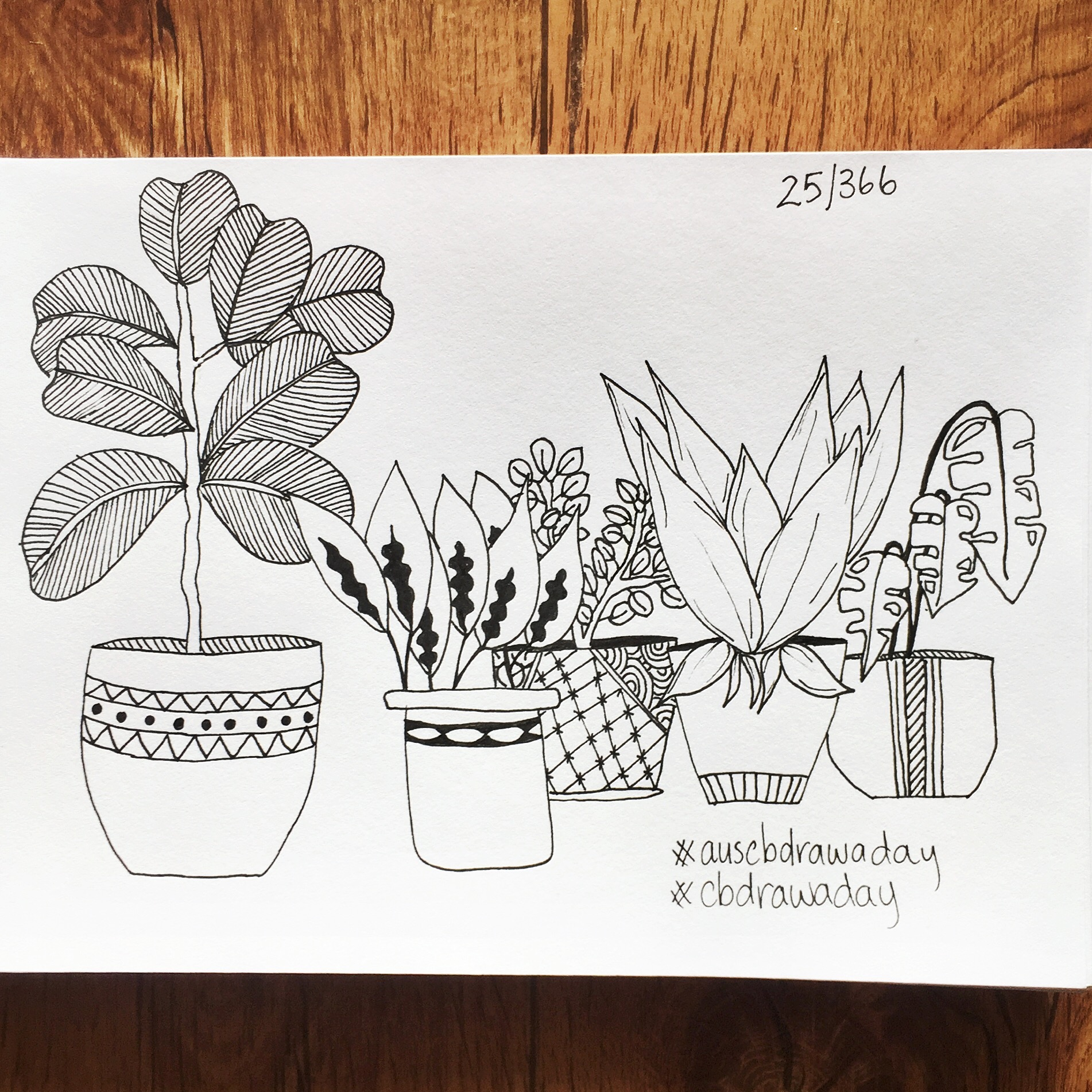Day 25 Houseplants